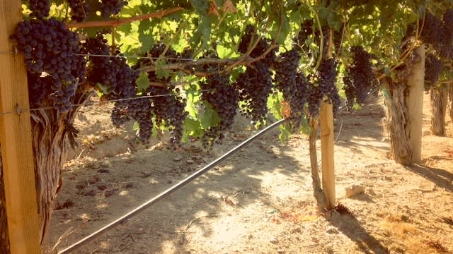 Vine-Sunlight-Metro-Market-Filter
