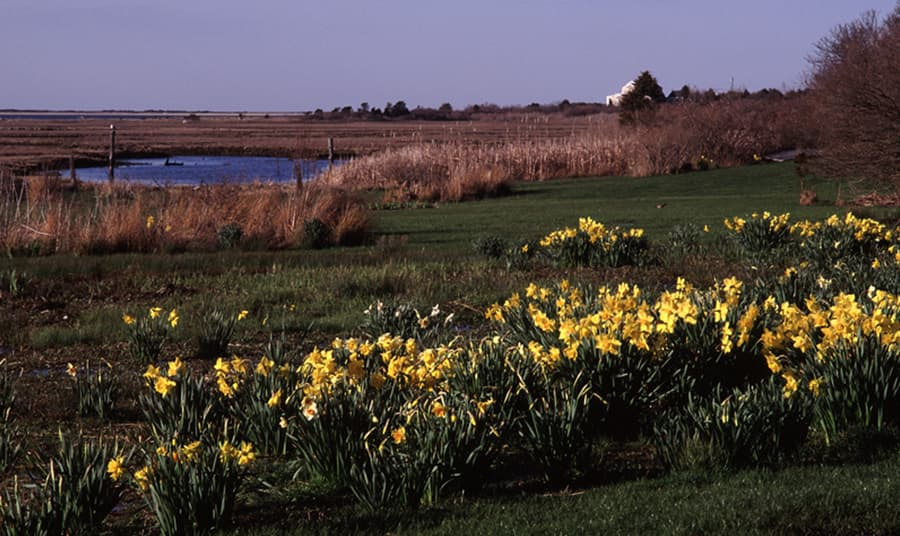 A Look Back at Daffodil Weekend