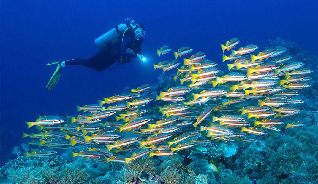 Manta Ray Night Dive of Hawaii