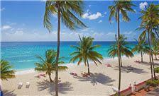 coconut tree view