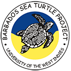 Barbados Sea Turtle Project