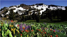 Spring Squaw Valley Resort