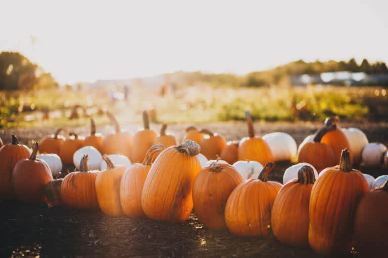 2018 Halloween Harvest Festival at Squaw Creek
