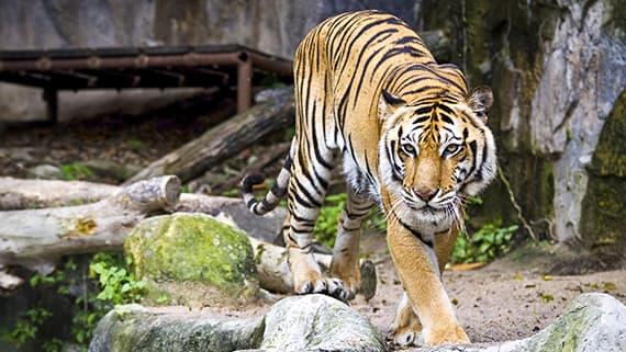 Amarillo Zoo, Texas