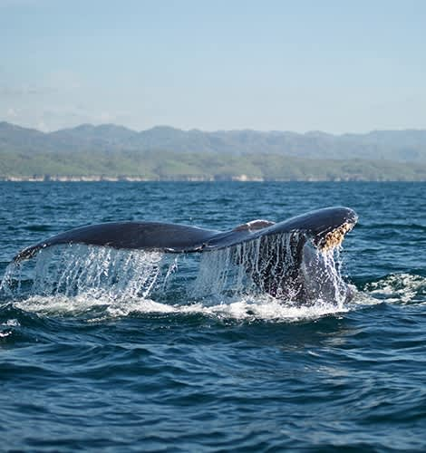 Whale Watching Cruises in Puerto Vallarta