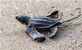 Liberación de tortugas marinas