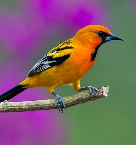Avistamiento de aves en Puerto Vallarta