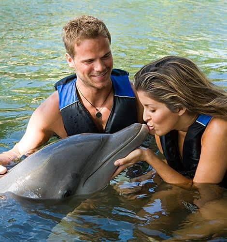 Aventuras de nado con delfines en México