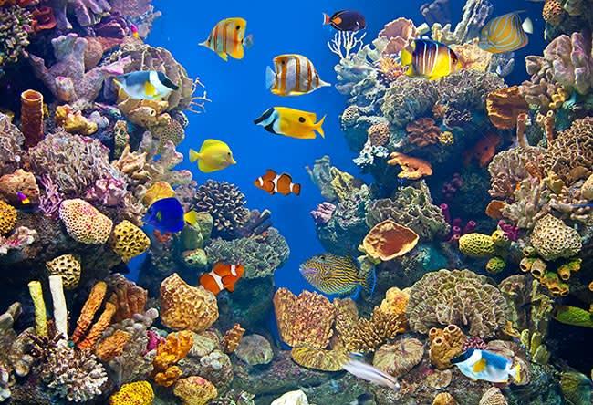 Waikiki Aquarium of Hawaii