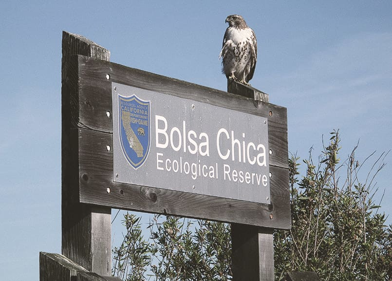 Bolsa Chica Ecological Reserve in Huntington Beach