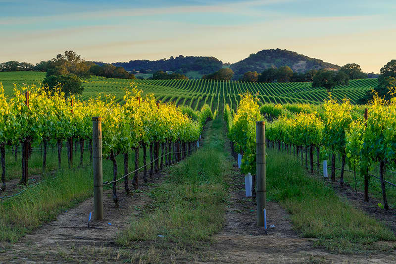 Wine Country Tour Package available at Petaluma Hotel