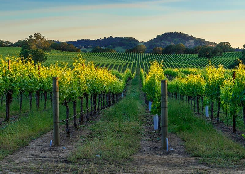 Wine Country Tour Package available at California Hotel