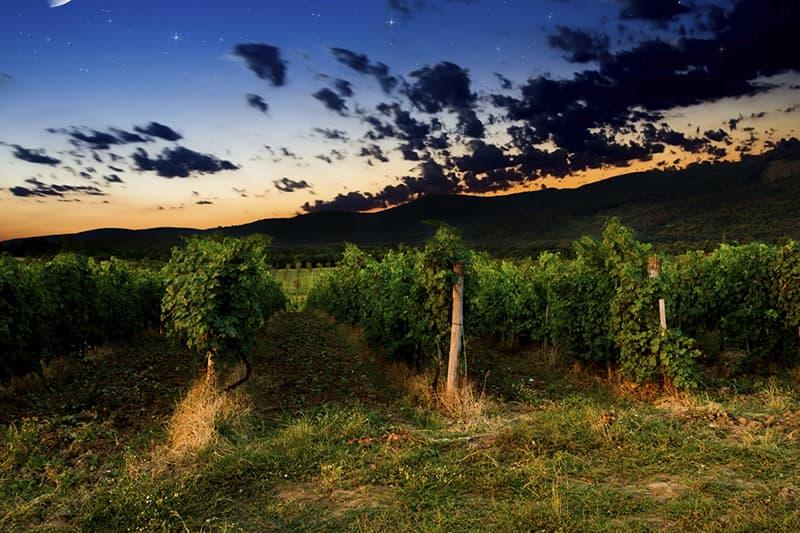 Benziger Wineries at Glen Ellen