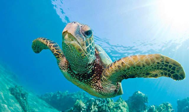 Sea Turtle Day Festival March 5th - Wyndham Deerfield Beach Resort Hotel