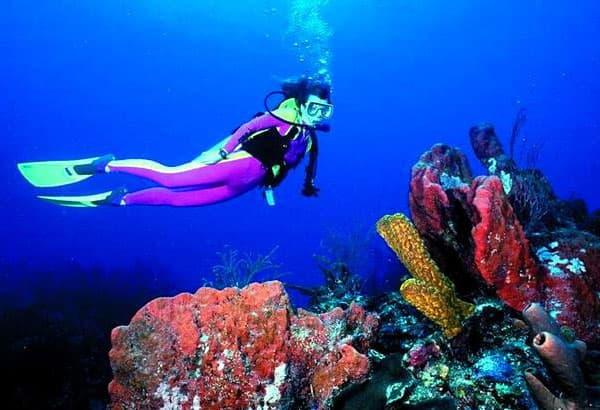 Dixie Divers at Florida