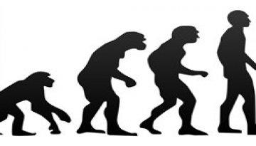 Darwin's evolution theory versus SEO