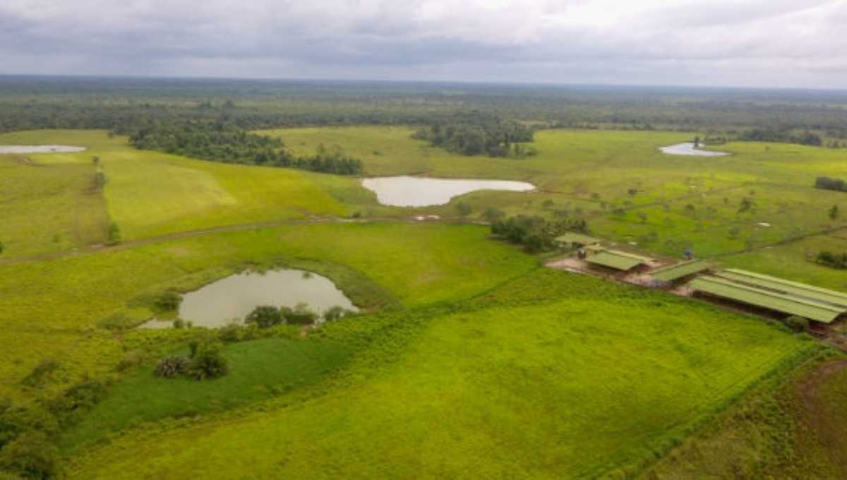 Tropical Buffalo Ranch with Modern Lucrative Dairy Facility