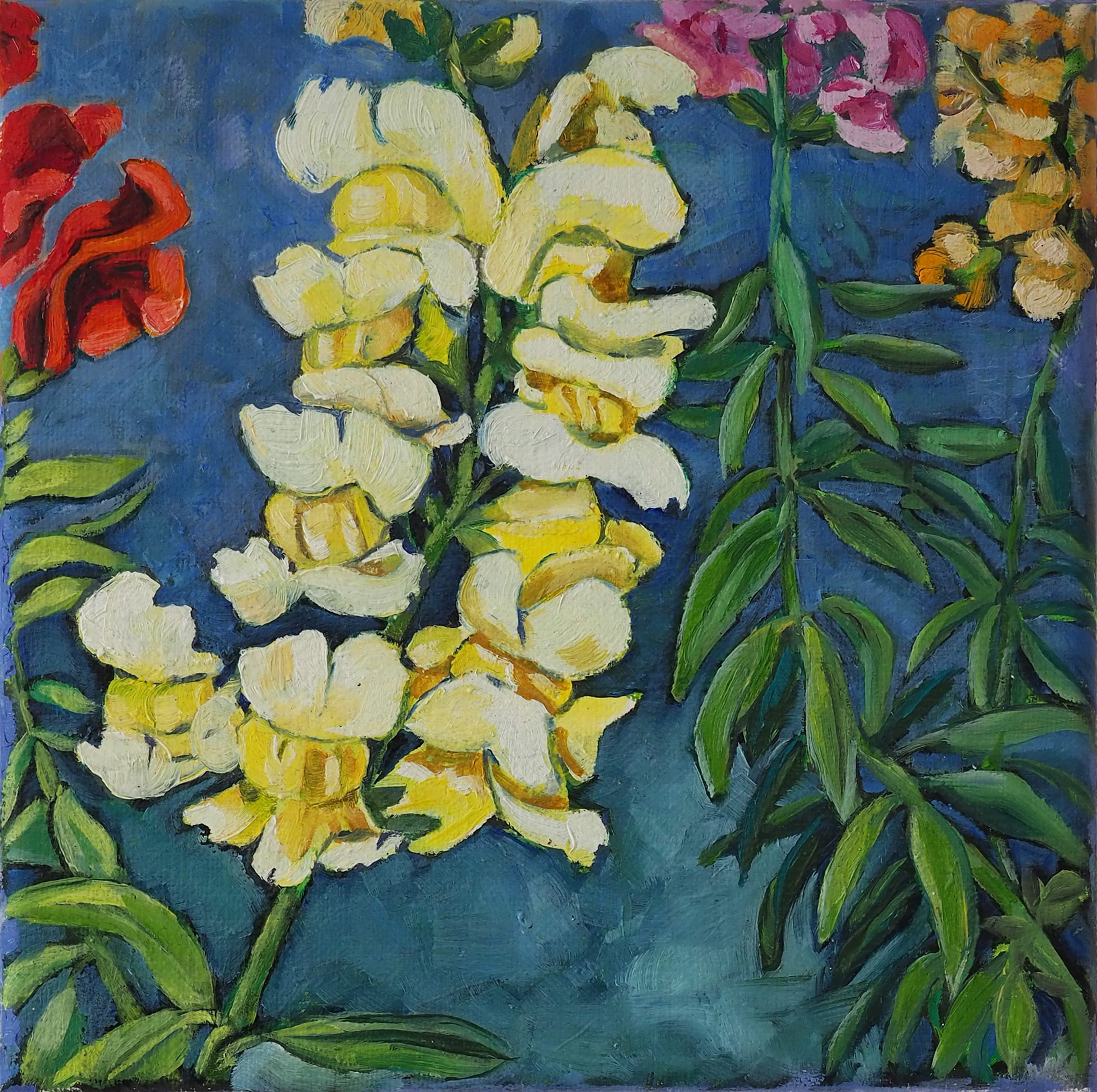 Chantilly Snapdragon 20x20cm oil on canvas $250 SOLD