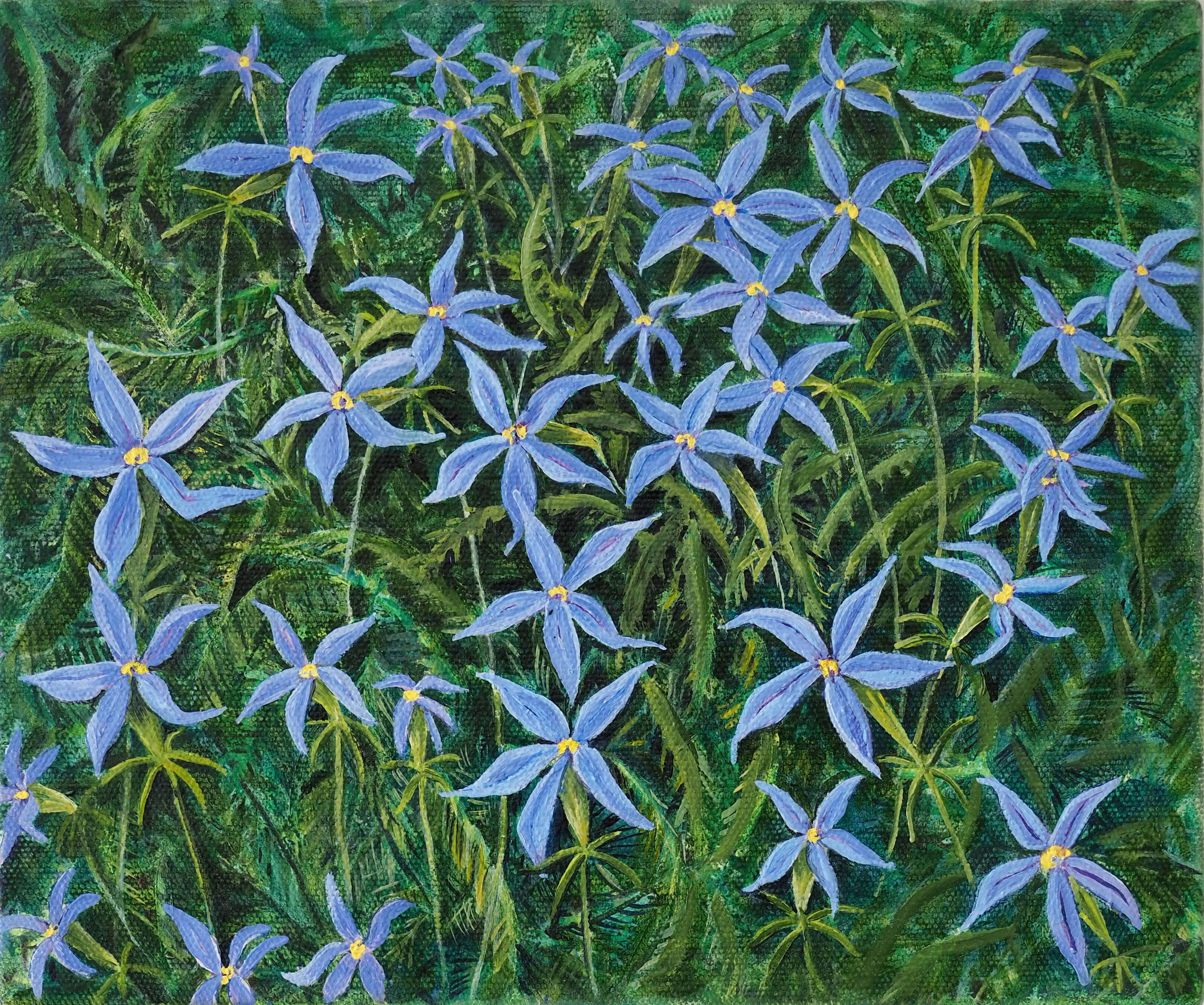 Little Blue Isotoma Stars 25x30cm oil on canvas $400 SOLD
