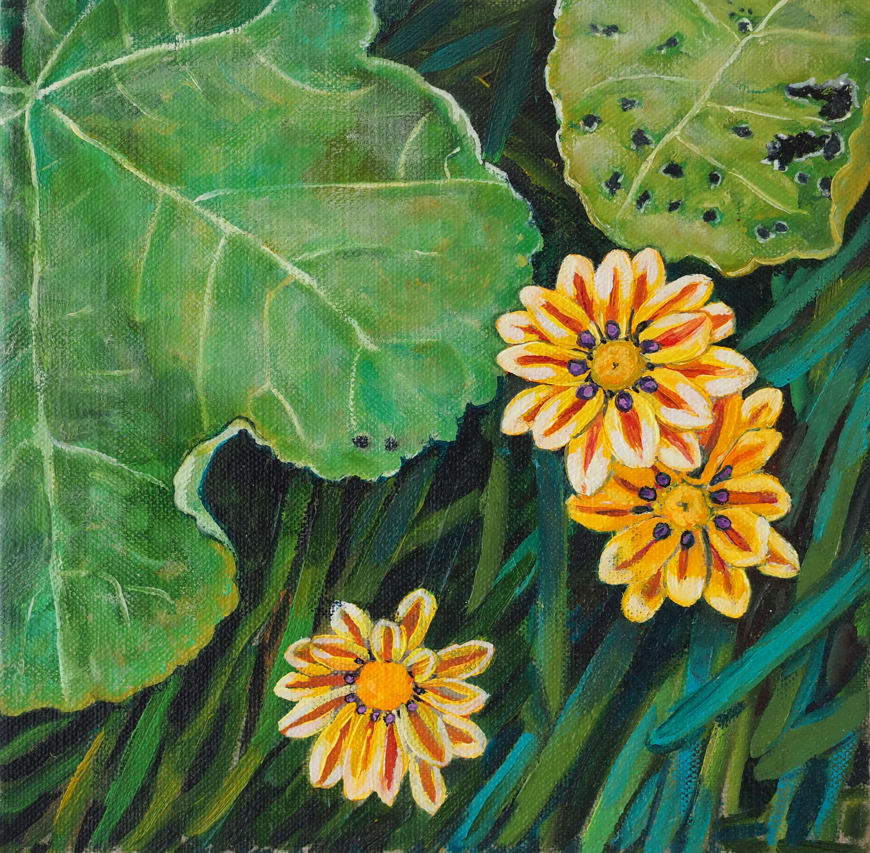 Gazania with Holly Hock leaves 20x20cm oil on linen board $250