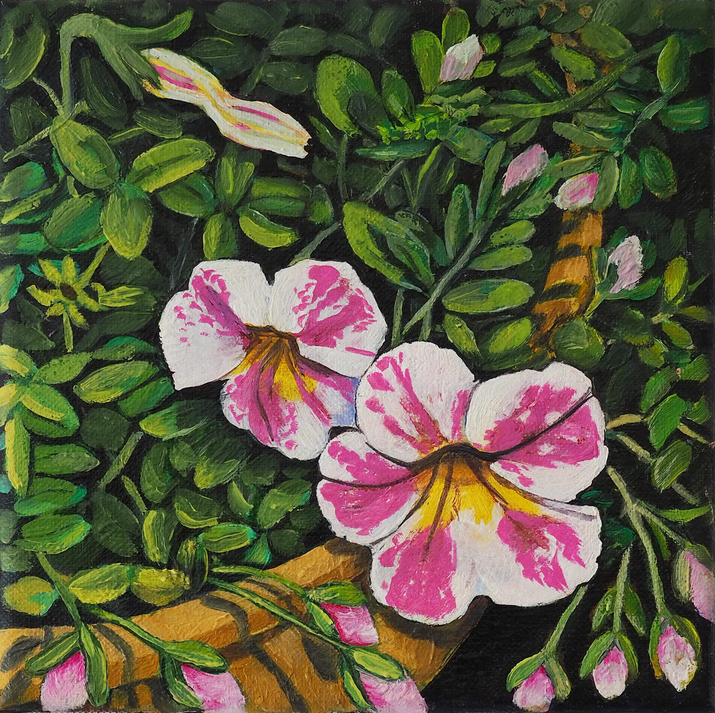 Potted Petunias 20x20cm oil on canvas $250 SOLD