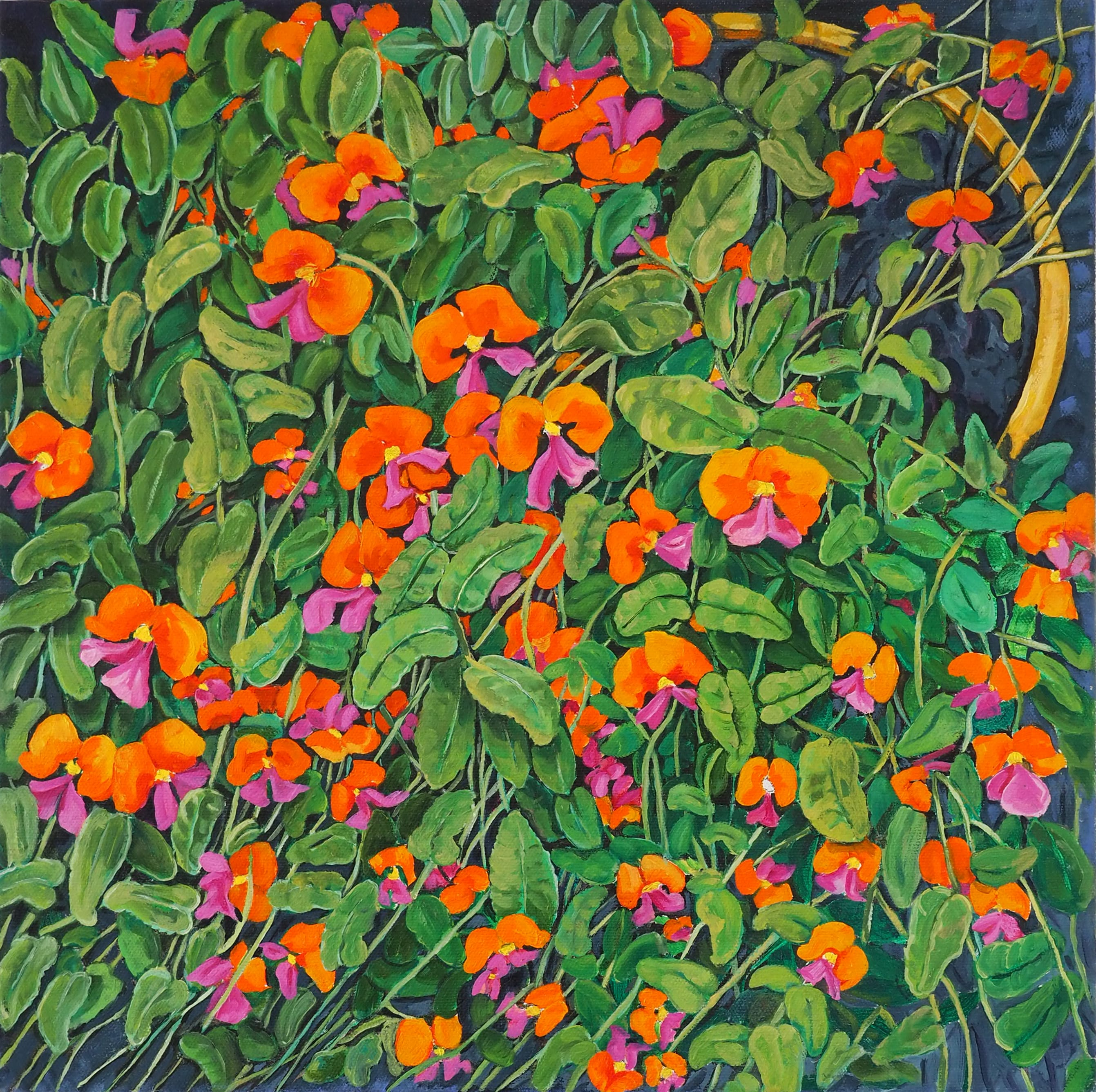 Potted Coral Pea 40x40cm oil on canvas $800