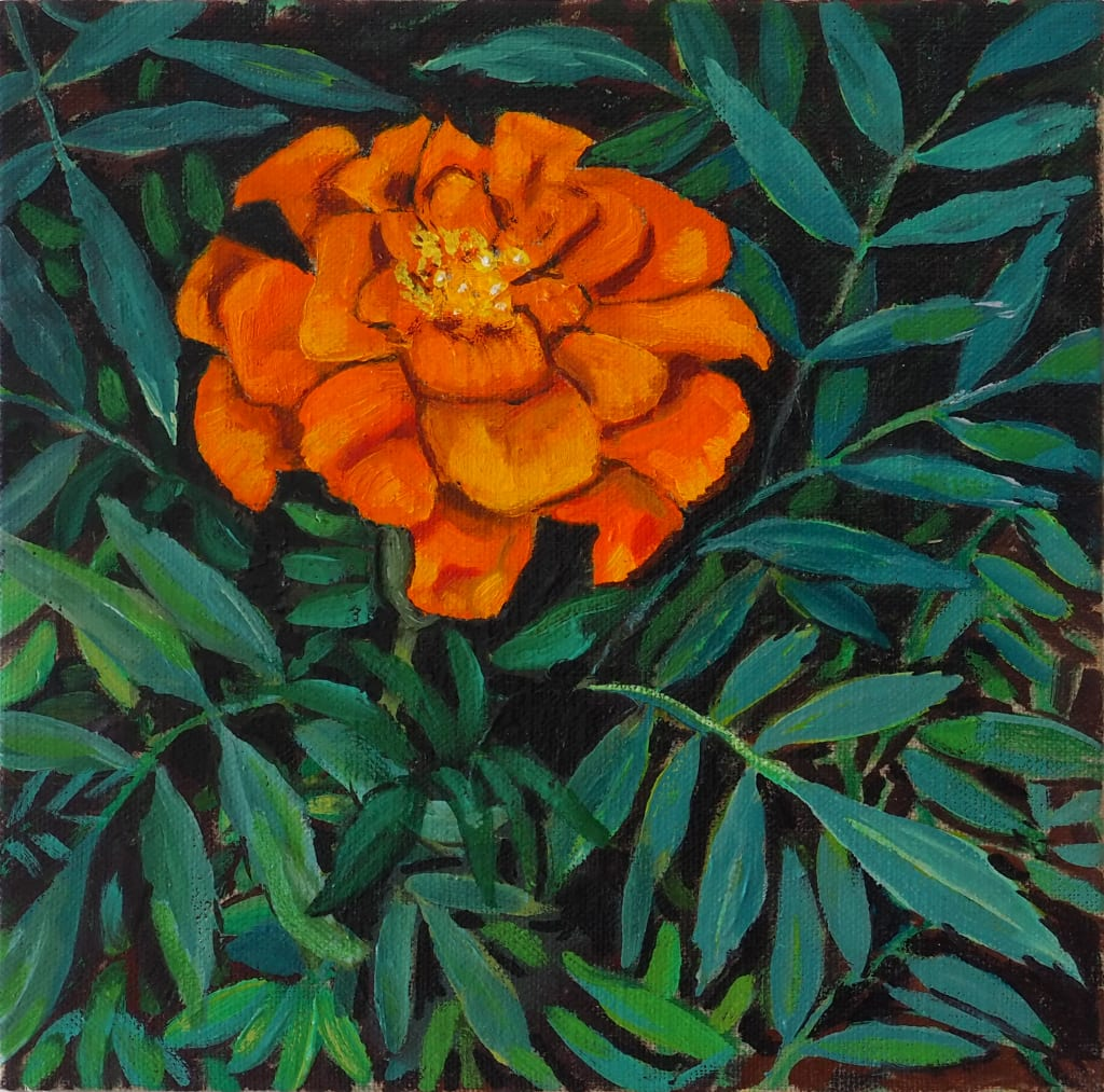 Tangerine Marigold 20x20cm oil on linen board $220 SOLD