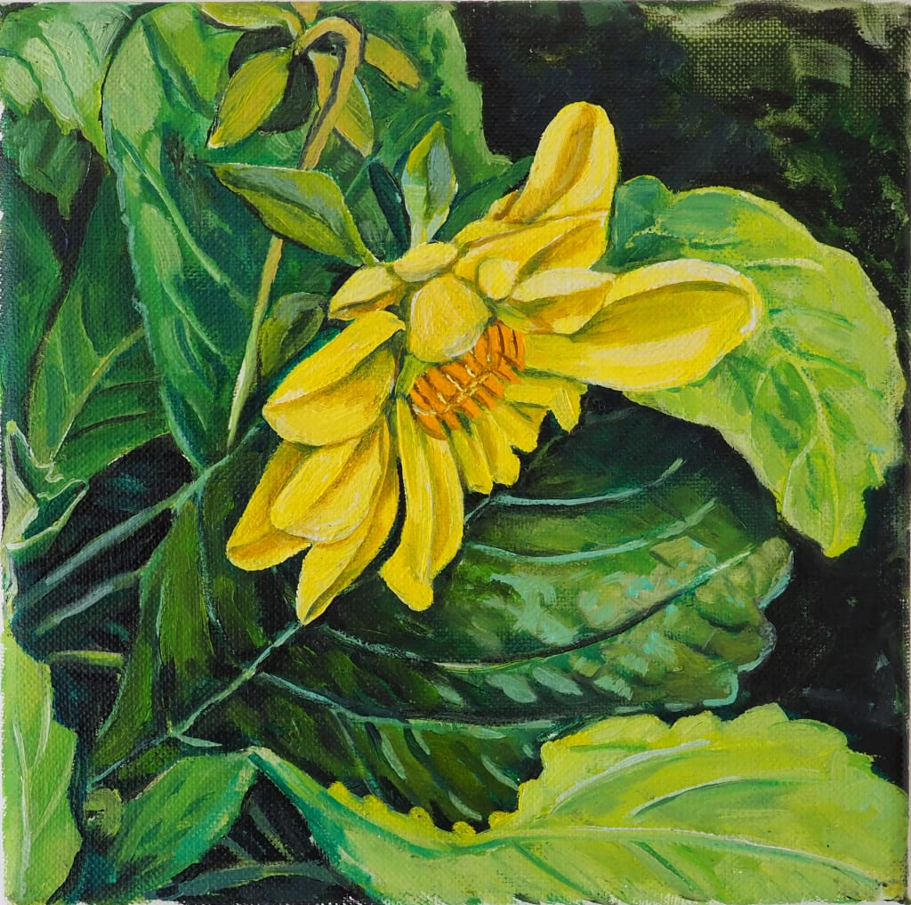 Yellow Dahlia 20x20cm oil on linen board $250 SOLD