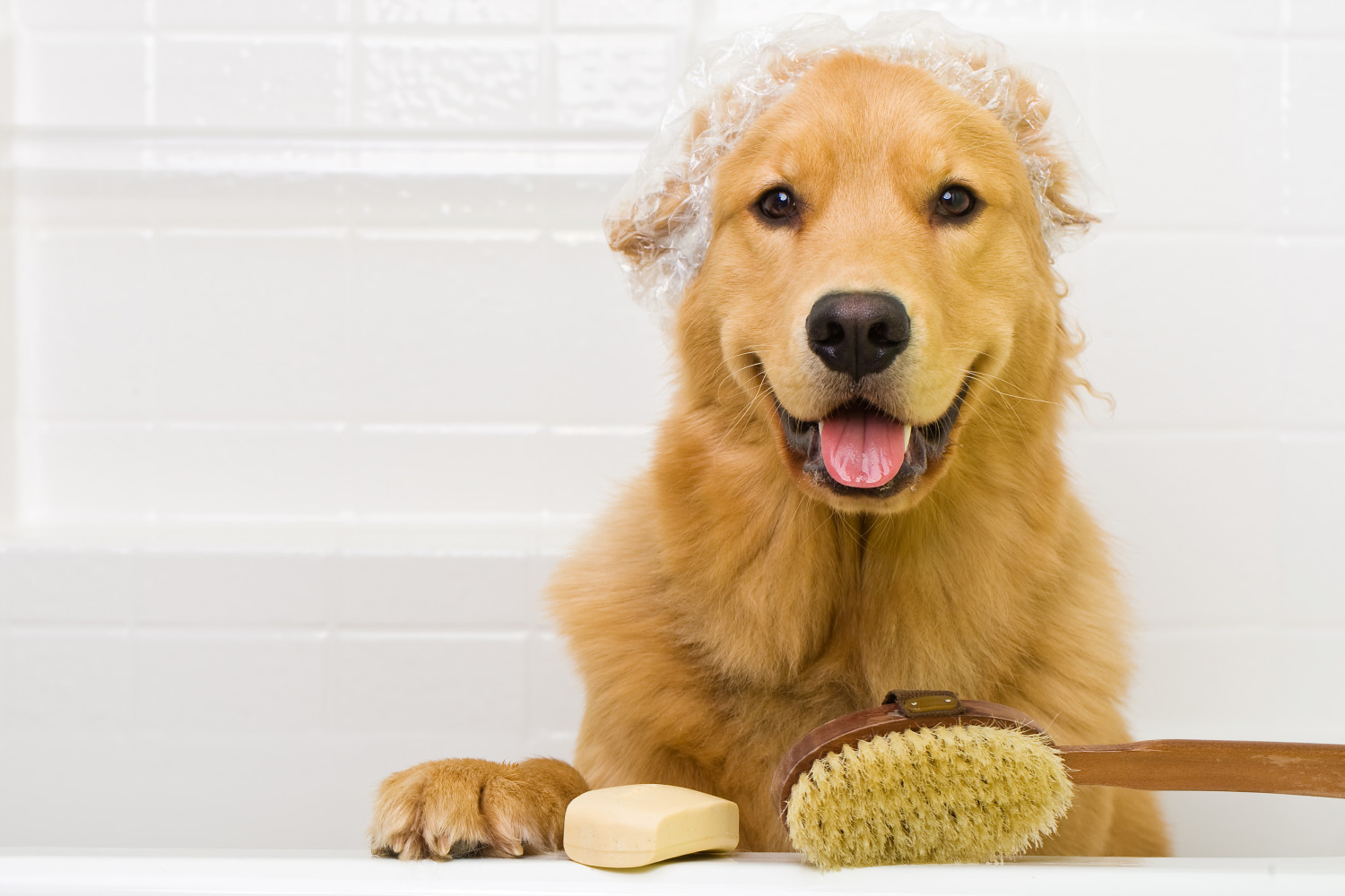 Herbal Shampoo for Dogs | Dr. Harvey's