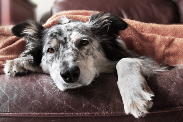 sick dog 3