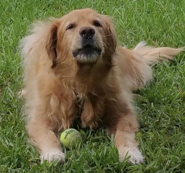 Briggs Testimonial with ball