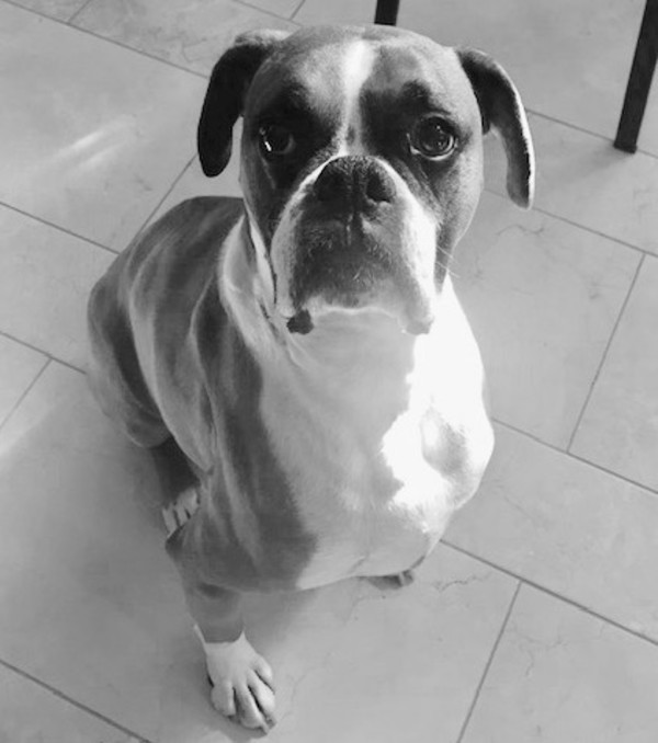 Jack the Boxer B&W