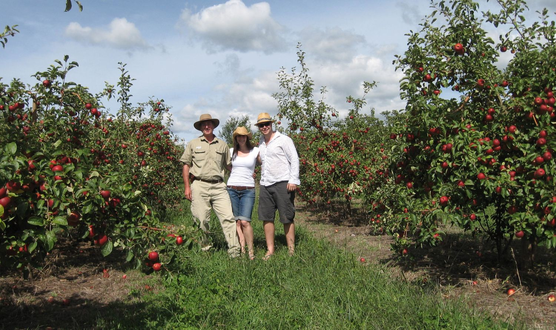 Walking through an apple orchard