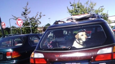 RACV Warns Against Leaving Children And Pets In Vehicles This Summer