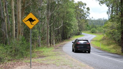 Australia's animal collision 'hotspots', according to insurance data