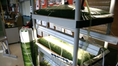 Schoolkids turn algae into fuel