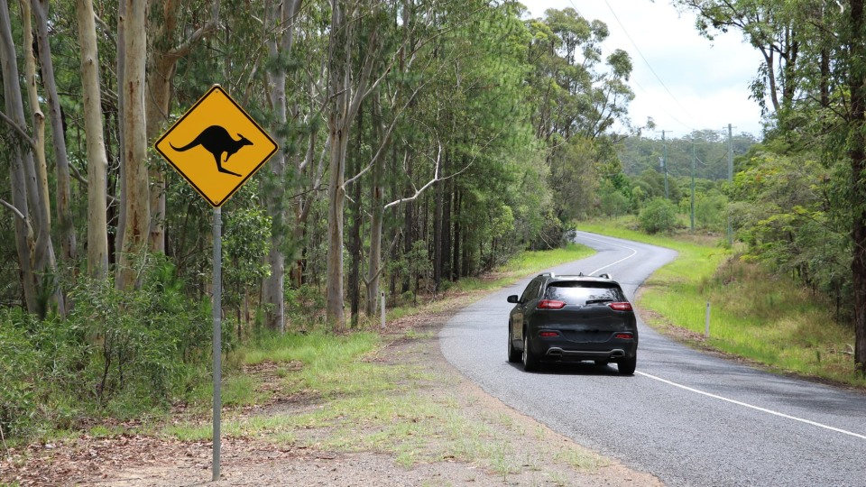 Australia's animal collision 'hotspots', according to insurance data