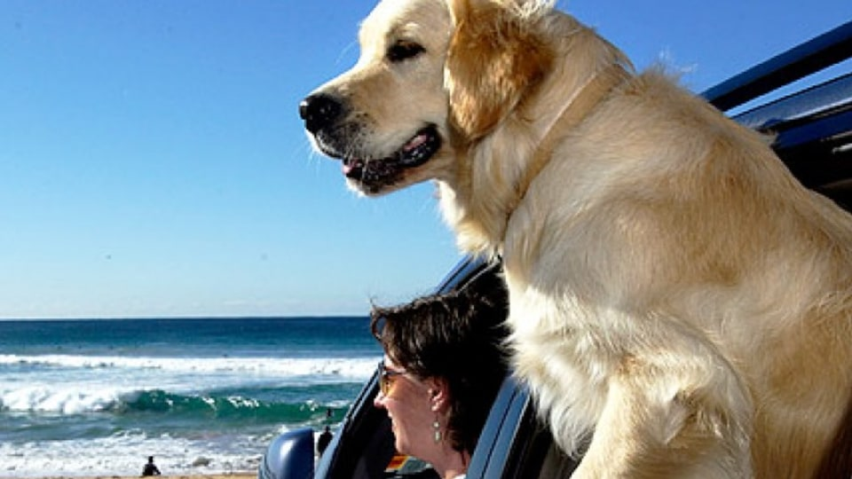 Travelling safely with your dog