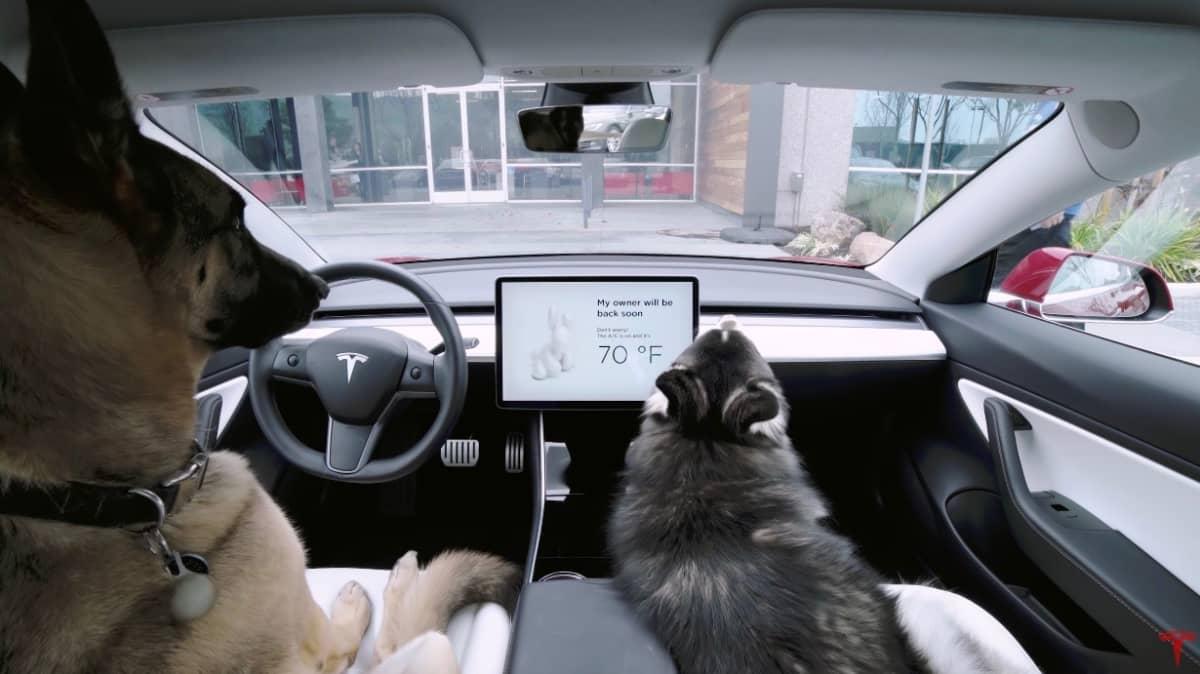 RSPCA v Tesla