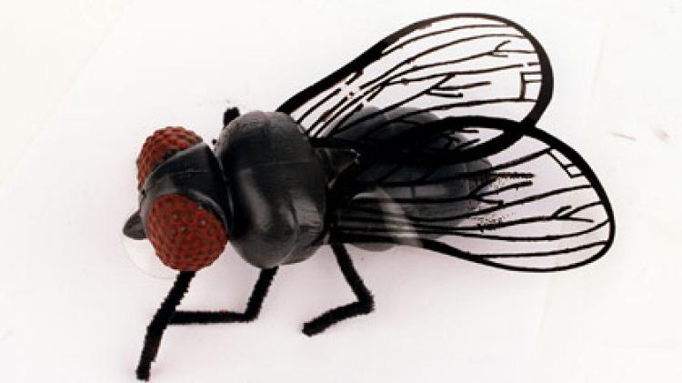 The humble (plastic) blowfly.