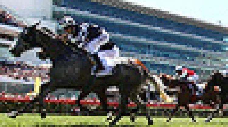 Flemington: from race horses to race cars?