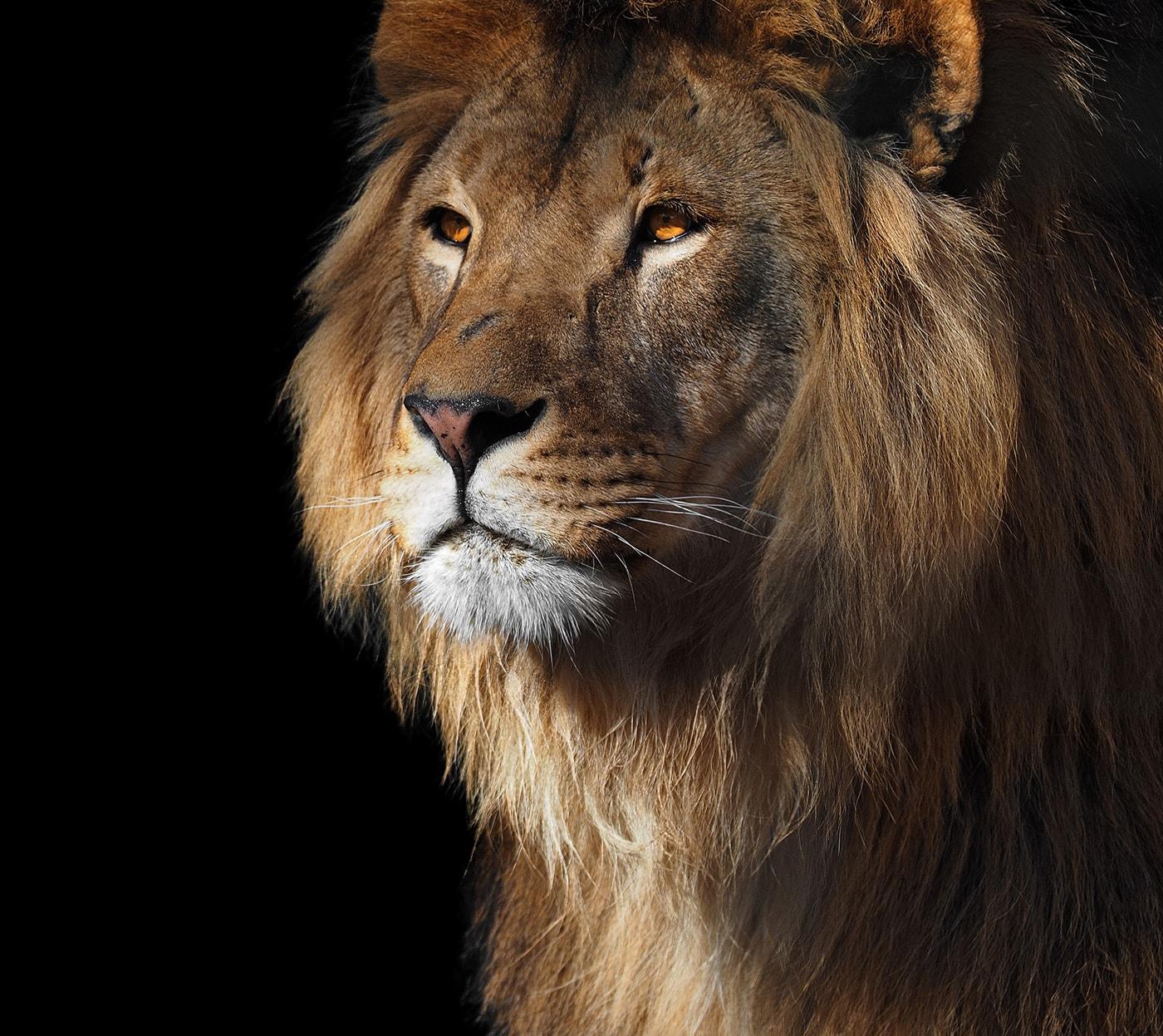 Lion weboldal