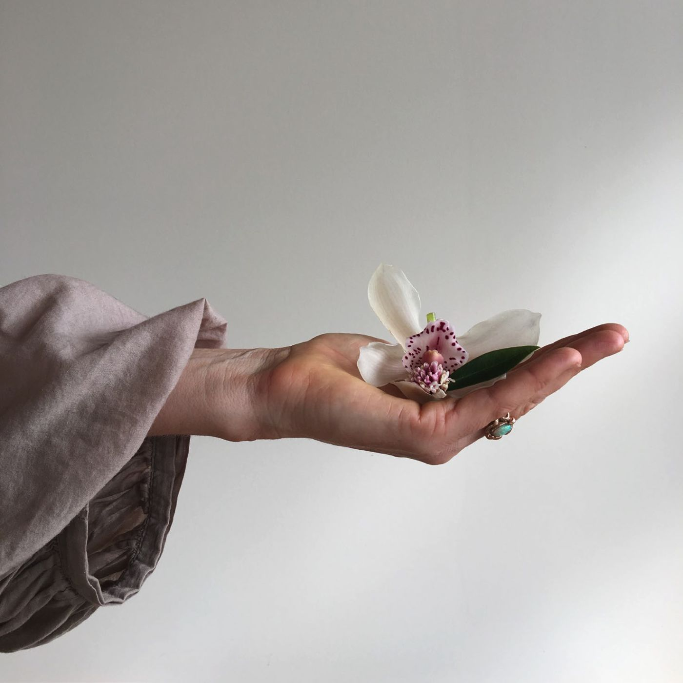 A hand holding a flower