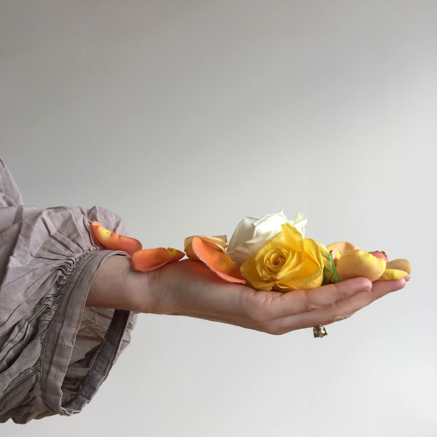 A hand holding yelow orange and white rose petals