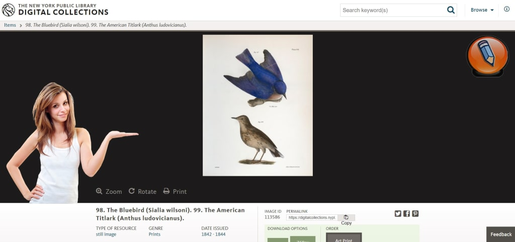 nypl digital collections image result