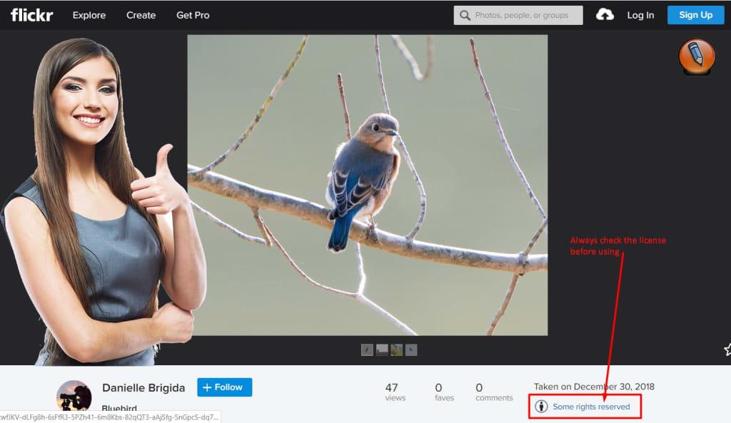 flickr photo license