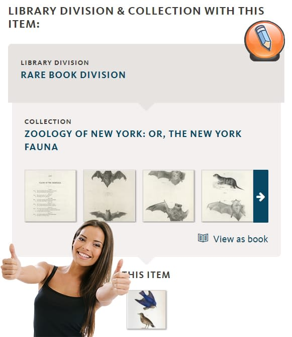 nypl digital collections image result collection