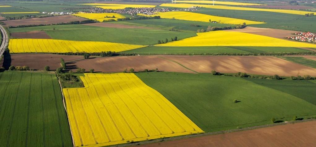 Что обязательно нужно знать при покупке земельного участка