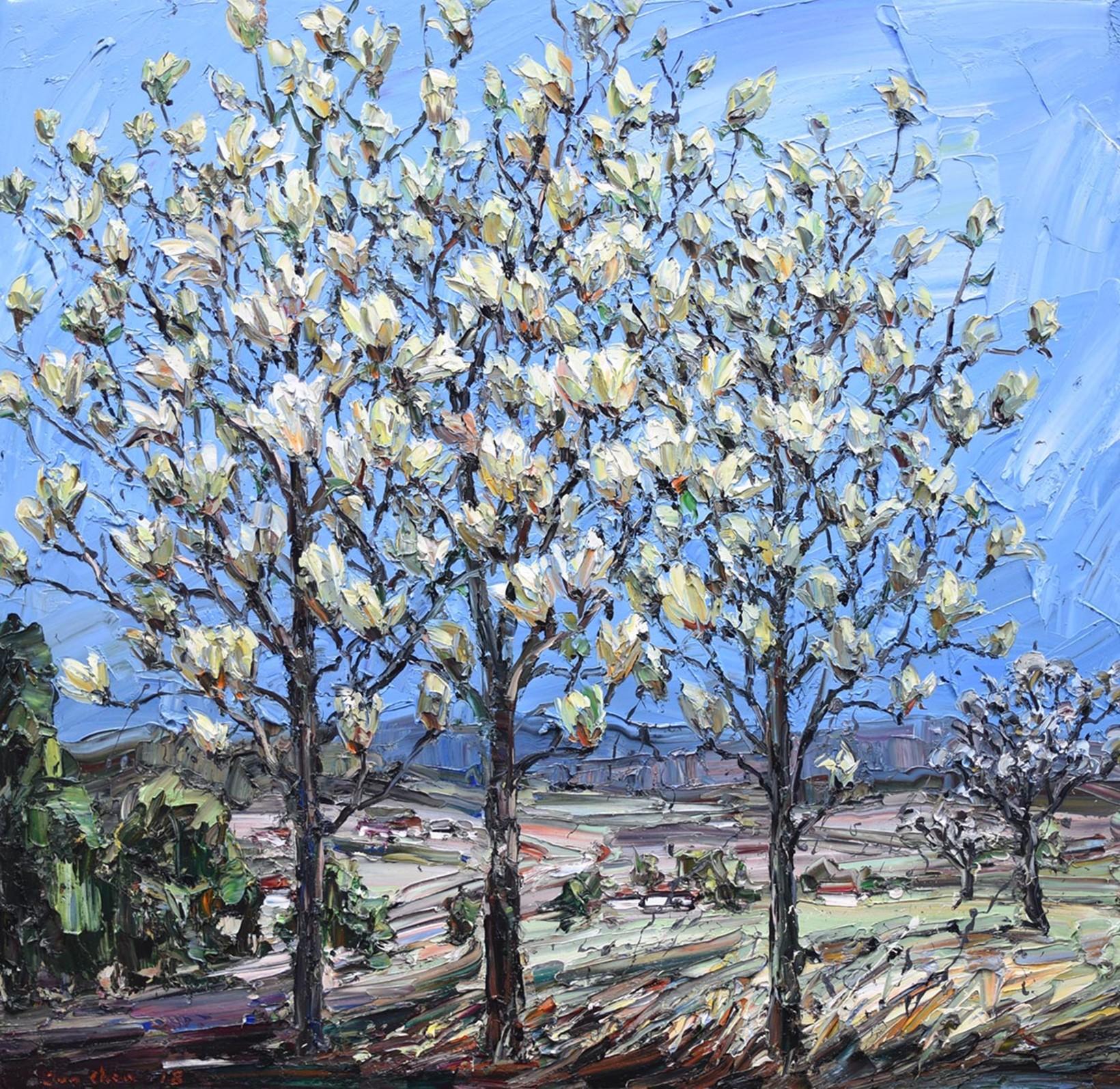 Three Yellow Magnolia Trees Jun Chen Nandahobbs Contemporary