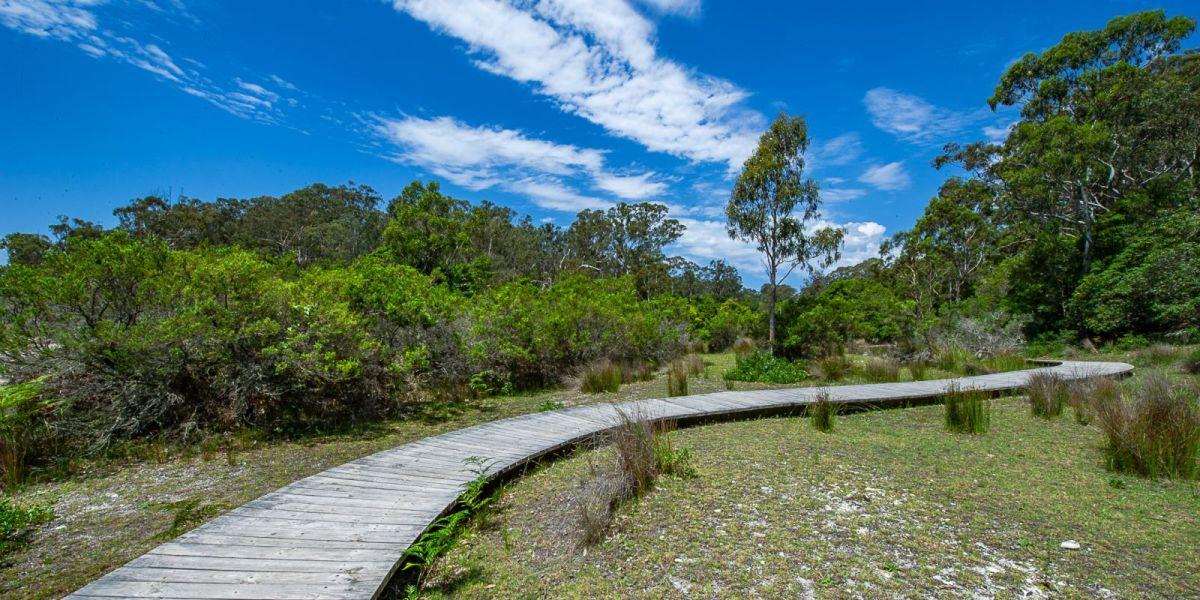 Bushwalking trail